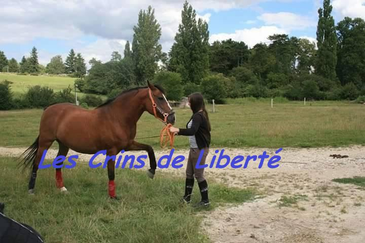 Dpt 37 - 18 ans - KIWI DE BEAUVAIS -PFS- adopté par Méline (2016) parti... K4b10