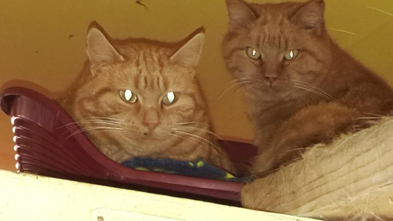 TYMINOU le chat 20151216