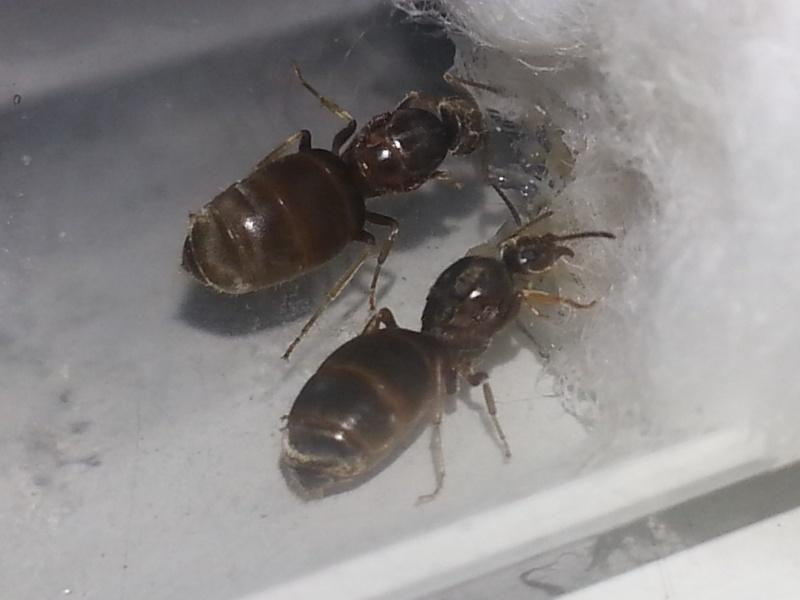 Blogs sur les fourmis 20151110