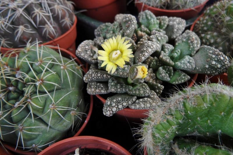 Floraisons de novembre - Page 11 00710