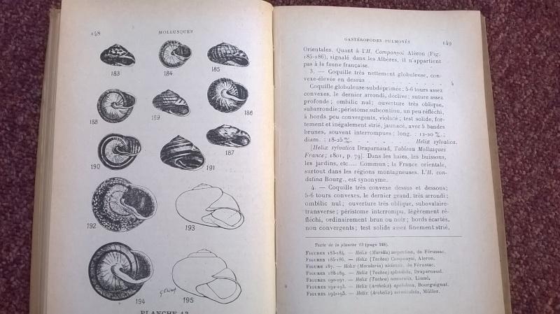 Mollusques de la France et des régions voisines - L. Germain Wp_20112