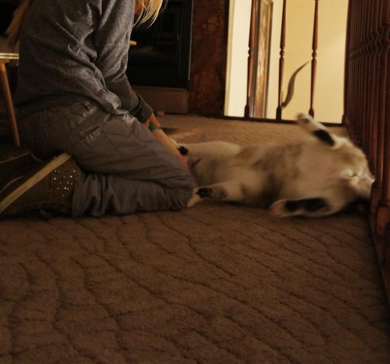 Laïka jeune chatte typée siamoise, gestante, à la rue - Page 3 Dsc07410