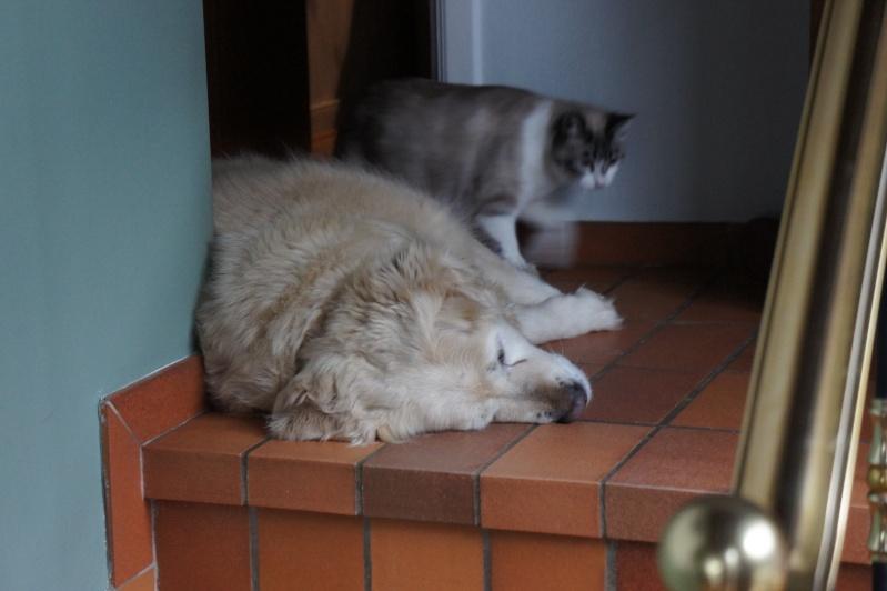 Laïka jeune chatte typée siamoise, gestante, à la rue - Page 3 Dsc07512