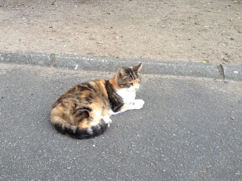 MIMI, adorable chatte tricolore de 16 ans Img_1410