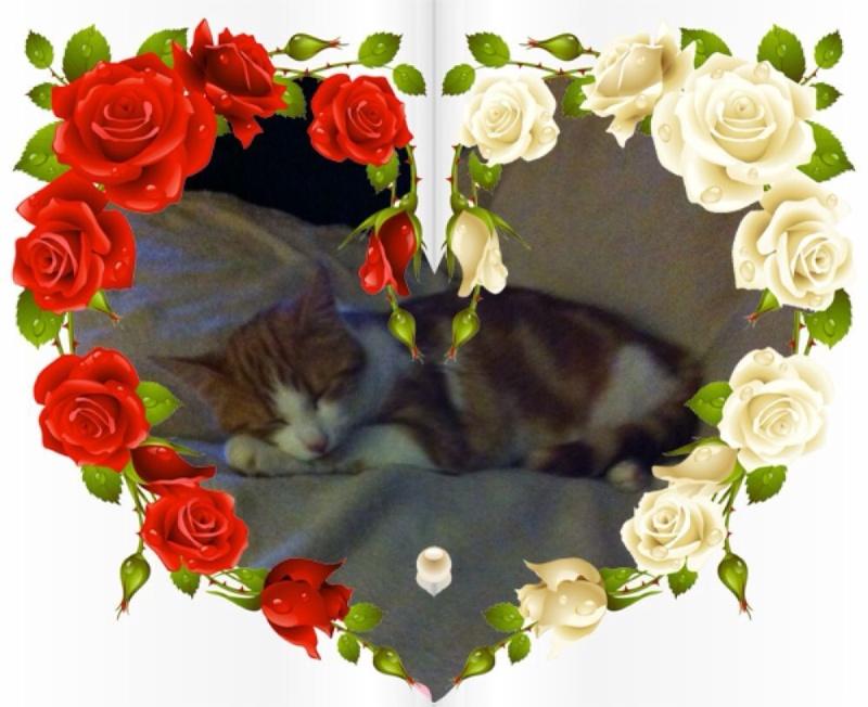 MARIE, adorable chatonne de 3 mois à la robe blanche - Page 2 Img_1712