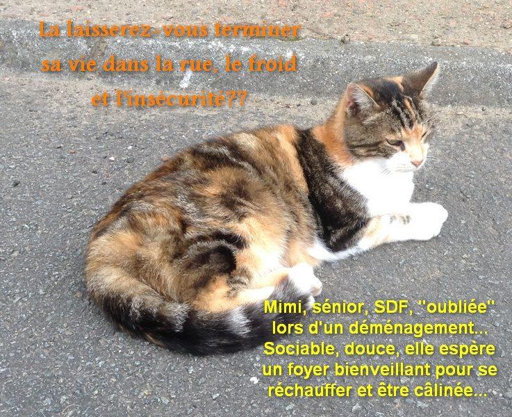 MIMI, adorable chatte tricolore de 16 ans Mimine10