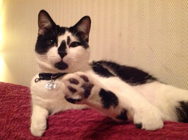 OLIVER, adorable chaton de 4 mois blanc et noir Oliver13