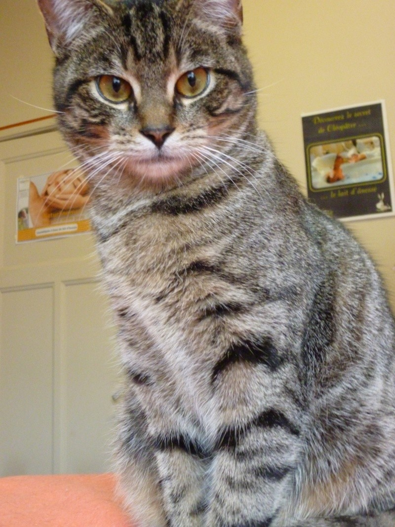 Oscar le tigre au grd coeur P1020513