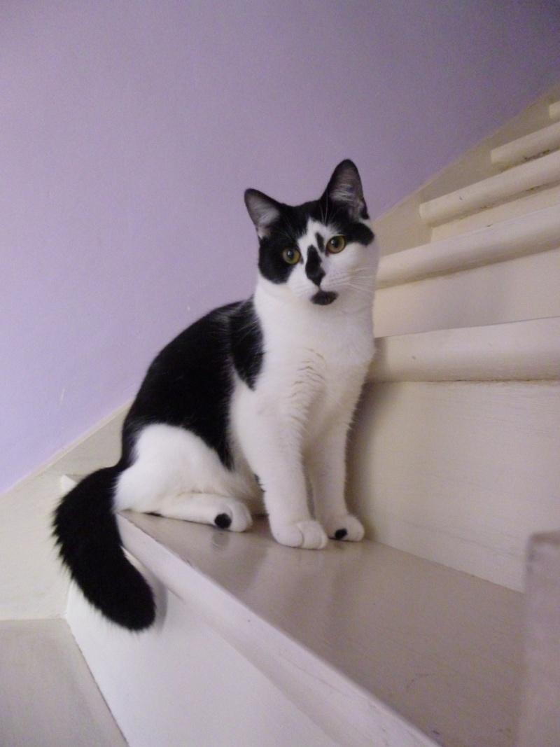 OLIVER, adorable chaton de 4 mois blanc et noir P1020519