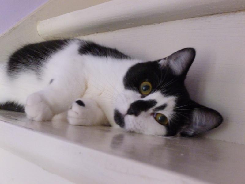 OLIVER, adorable chaton de 4 mois blanc et noir P1020520