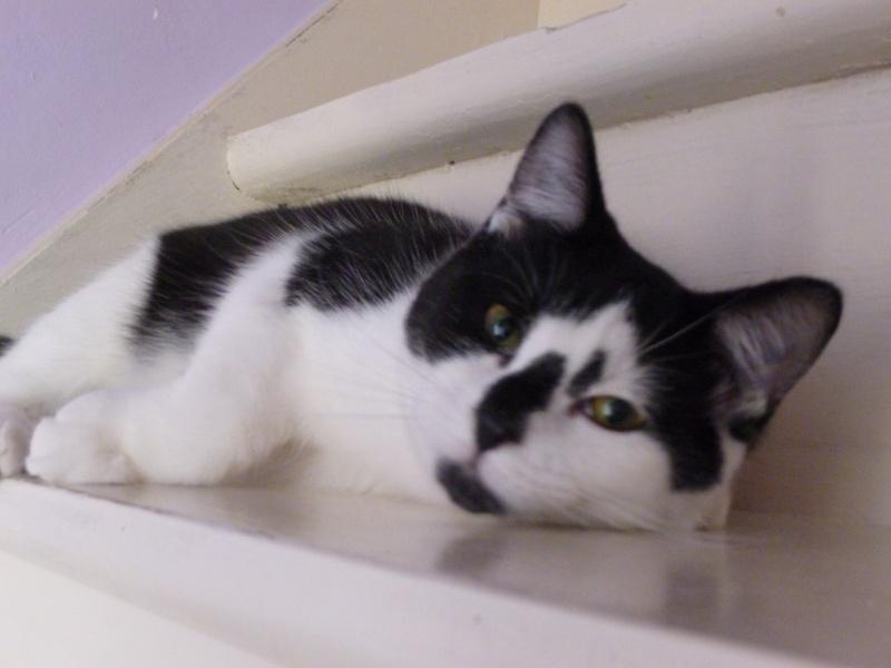 OLIVER, adorable chaton de 4 mois blanc et noir P1020521