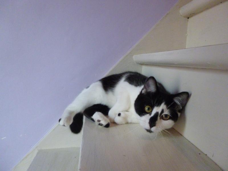 OLIVER, adorable chaton de 4 mois blanc et noir P1020524