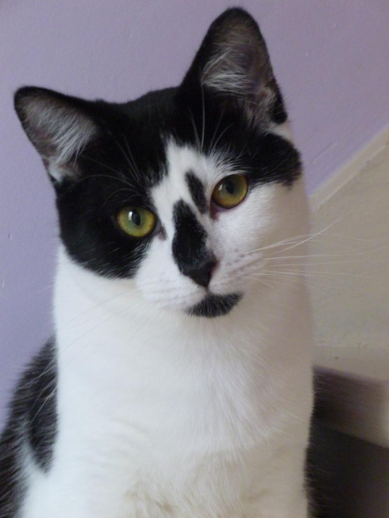 OLIVER, adorable chaton de 4 mois blanc et noir P1020610