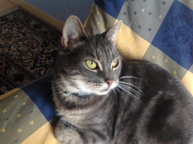 OLIVER, adorable chaton de 4 mois blanc et noir Stella10