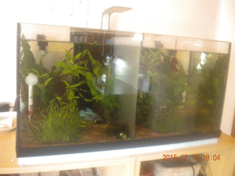 100 litres pour femelles Betta Dscn4810