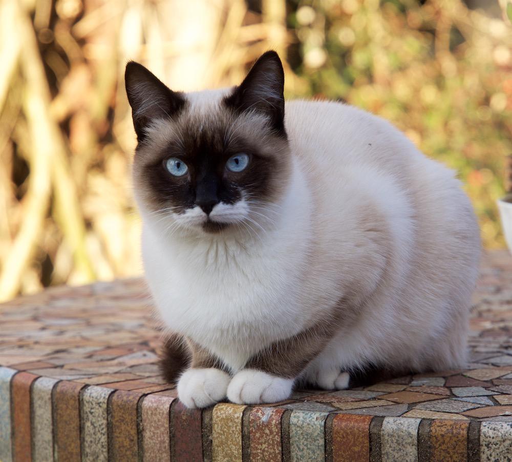 Un temps à mettre un chat dehors. Chaton11
