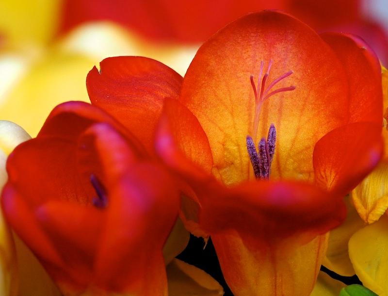 Pour occupper un après midi pluvieux Fleurs10