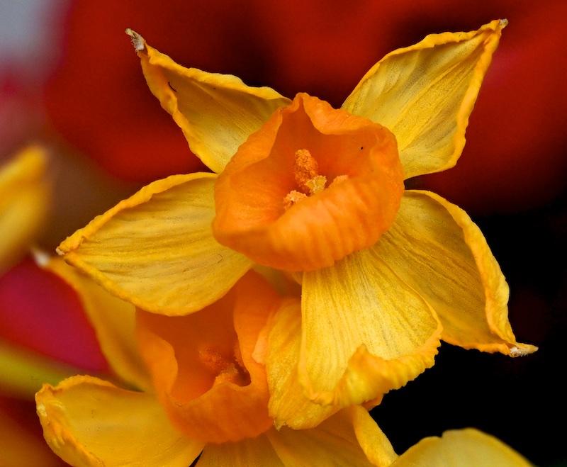 Pour occupper un après midi pluvieux Fleurs12