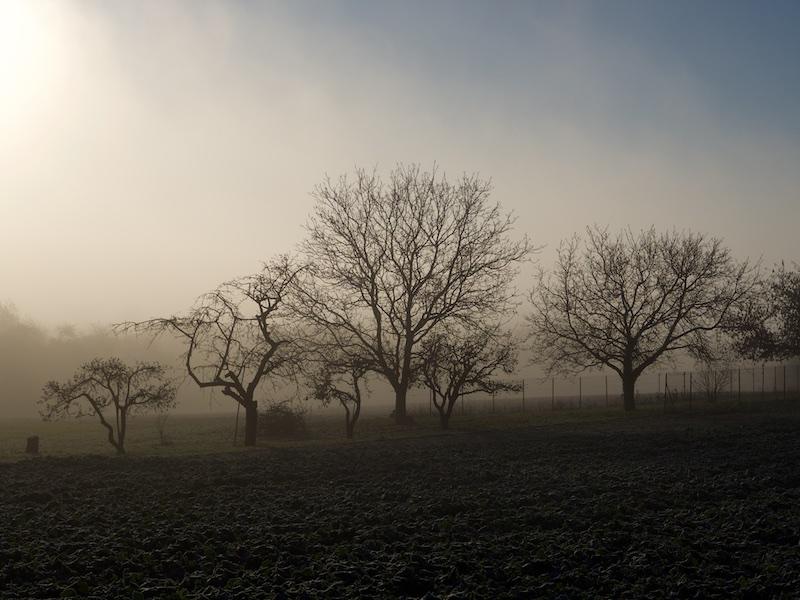Promenade du matin Matin_11