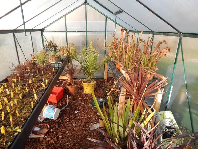 L'hiver et les plantes. Dscn2911