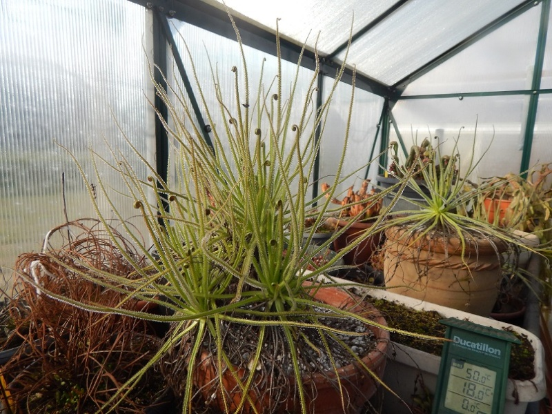 L'hiver et les plantes. Dscn2912