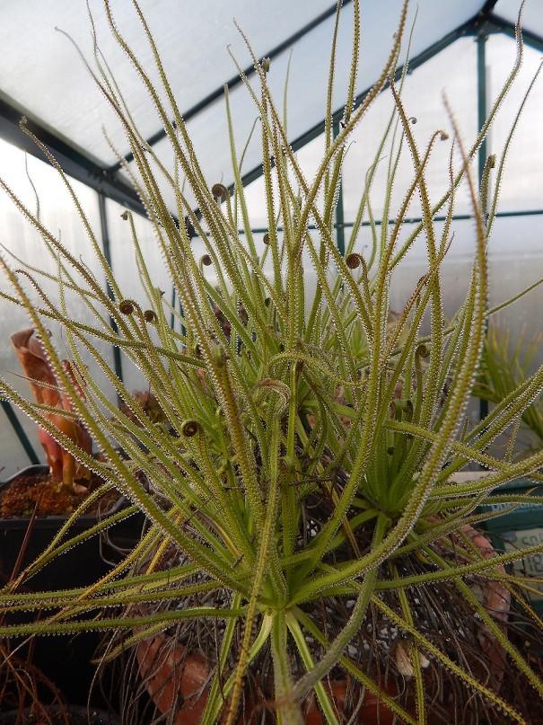 L'hiver et les plantes. Dscn2914