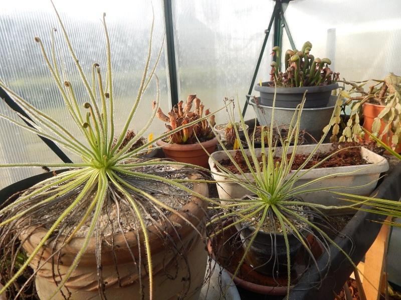 L'hiver et les plantes. Dscn2915