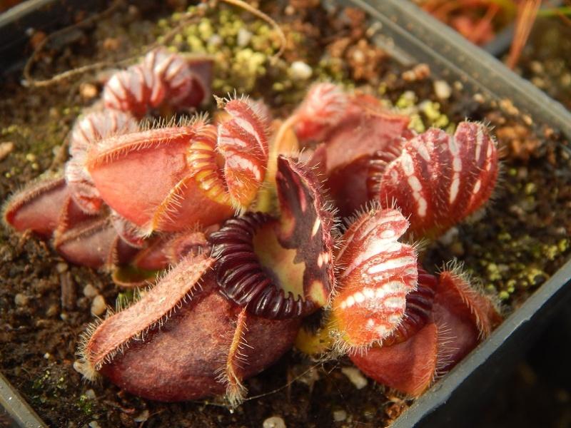 L'hiver et les plantes. Dscn2916