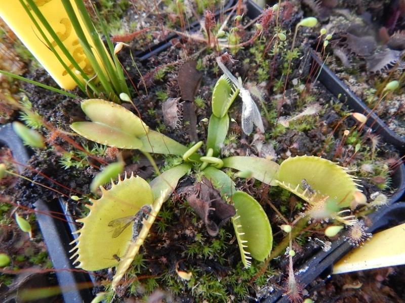 L'hiver et les plantes. Dscn2922
