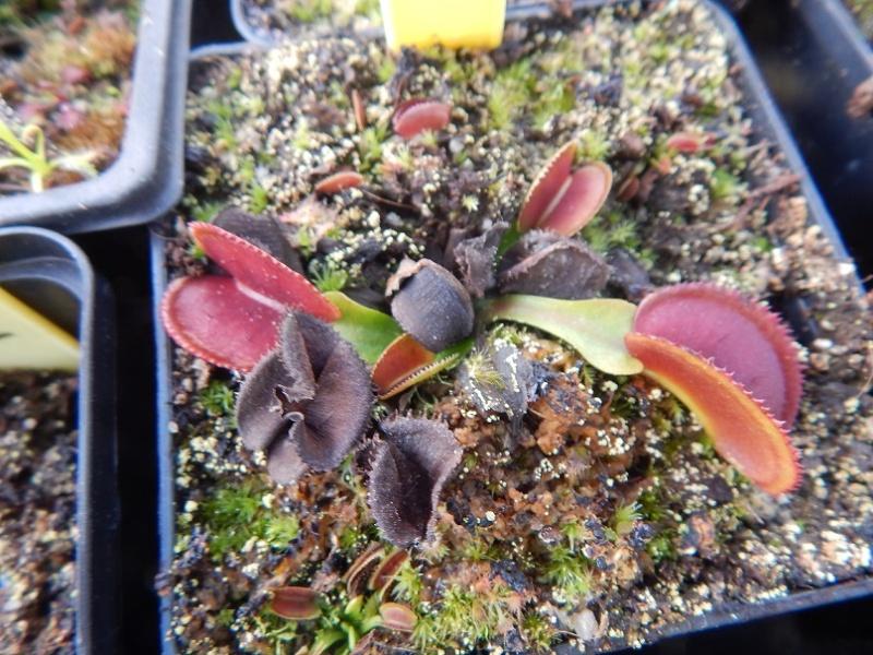 L'hiver et les plantes. Dscn2923
