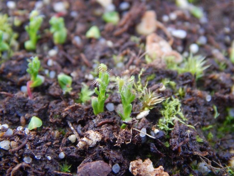 L'hiver et les plantes. Dscn2927
