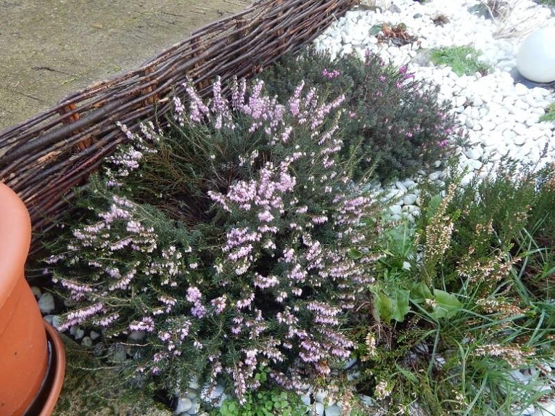L'hiver et les plantes. Dscn2928