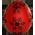 Poule de Noël Carved11