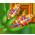 Poulet Volant => Ailes de Poulet Indian10