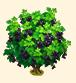 Vous cherchez un arbre ? Venez cliquer ici !!! Sans_328