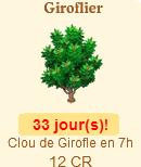 Giroflier => Clou de Girofle Sans_375