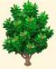 Vous cherchez un arbre ? Venez cliquer ici !!! Sans_376