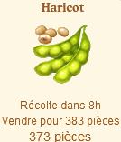 Haricot  Sans_380