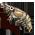 Décoration Étang à Crevette [Décoration à collecte limitée] Shrimp11