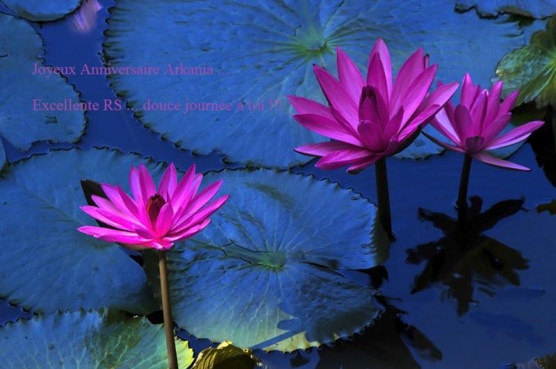 Bon Anniversaire Arkania Lotus-10