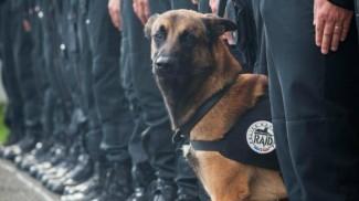 Hommage à DIESEL/MALIKO - chienne du RAID Raid311