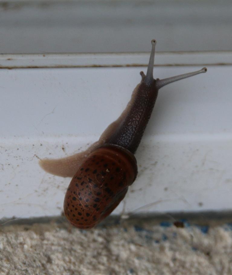 Escargot de Quimper Img_2911