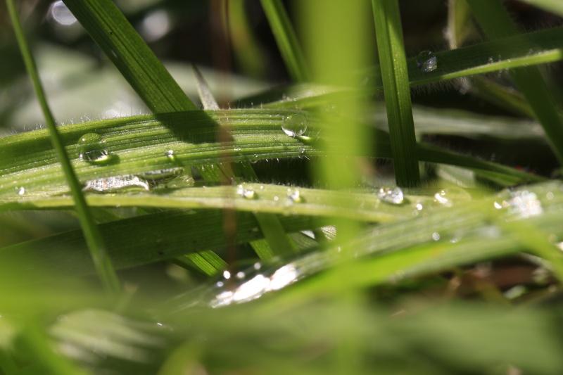 Mes photos ... Nature Macro - Page 3 _mg_5010