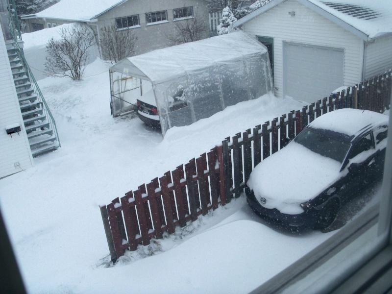 Où est l'hiver? 101_0013