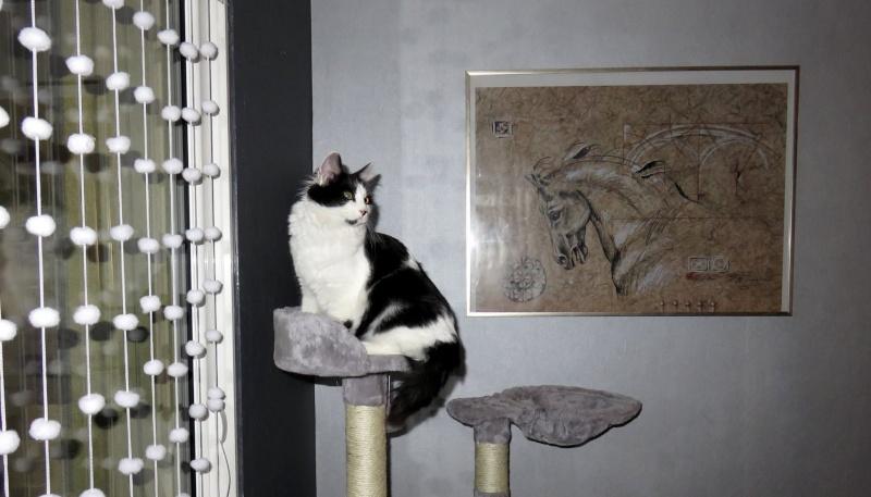 Lutti, mâle, .... 2015, noir et blanc poil long Lutti10