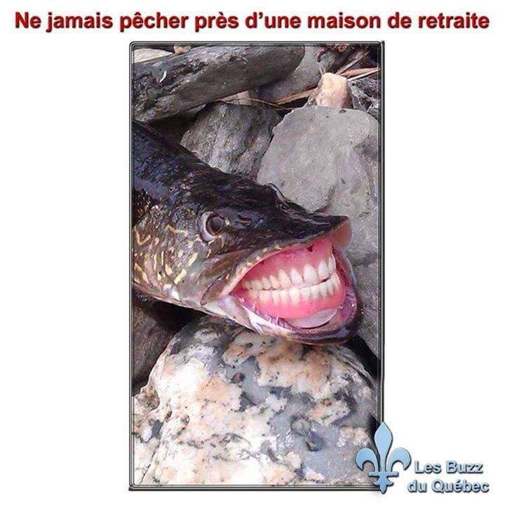 humour - Page 2 12043110