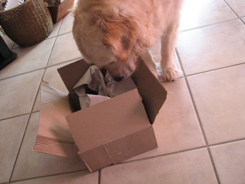 Concours photos de vos chiens, chats à l'occasion des fêtes de fin d'année - Page 4 2015_h14