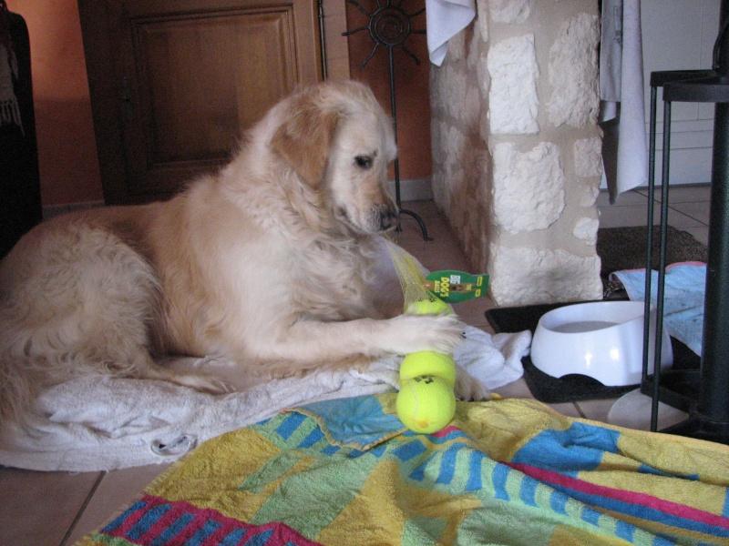 Concours photos de vos chiens, chats à l'occasion des fêtes de fin d'année - Page 4 2015_h15