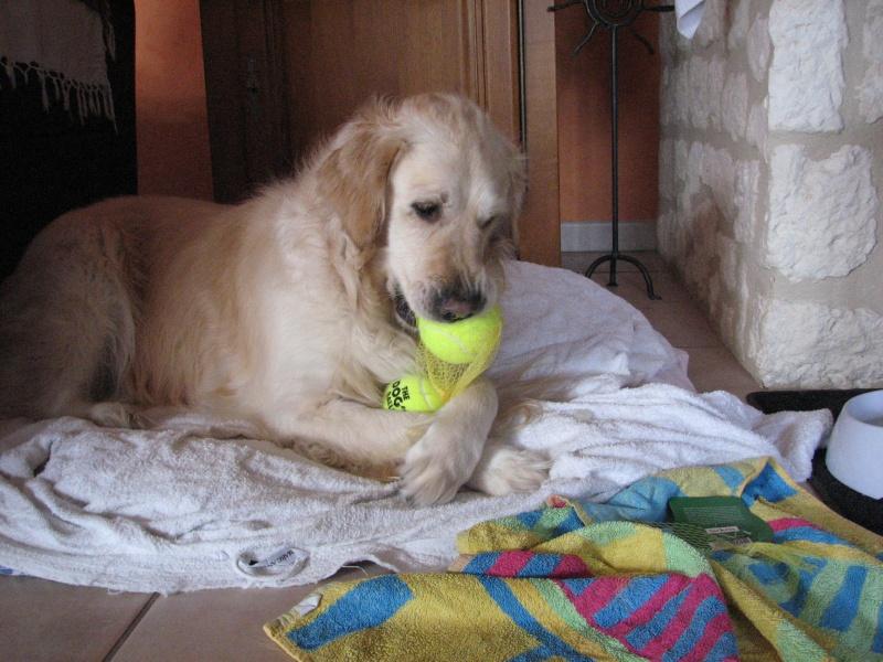 Concours photos de vos chiens, chats à l'occasion des fêtes de fin d'année - Page 4 2015_h17