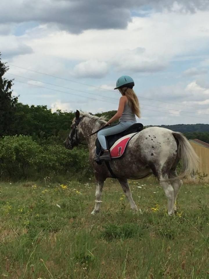 Quirby, poney apaloosa dep55 11774310
